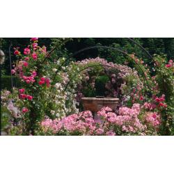 Les Journées de la Rose à...