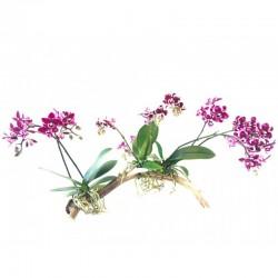 Arthur Orchidées